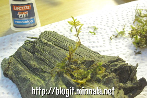 Loctite-liimalla kasvi kiinni