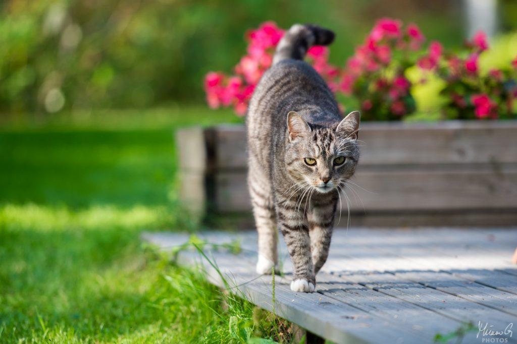 Ferry Corsten lemmikki kissa