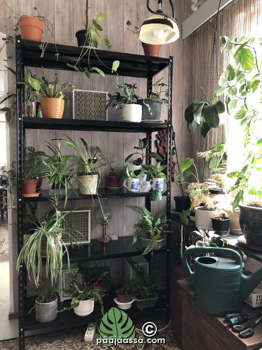 huonekasvit hyllykössä