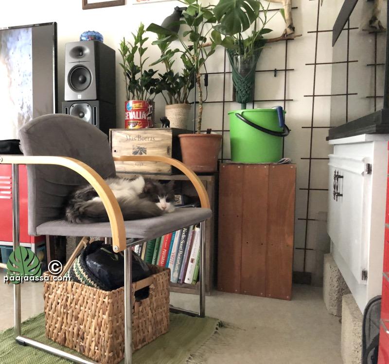 Urholla on kissa-TV