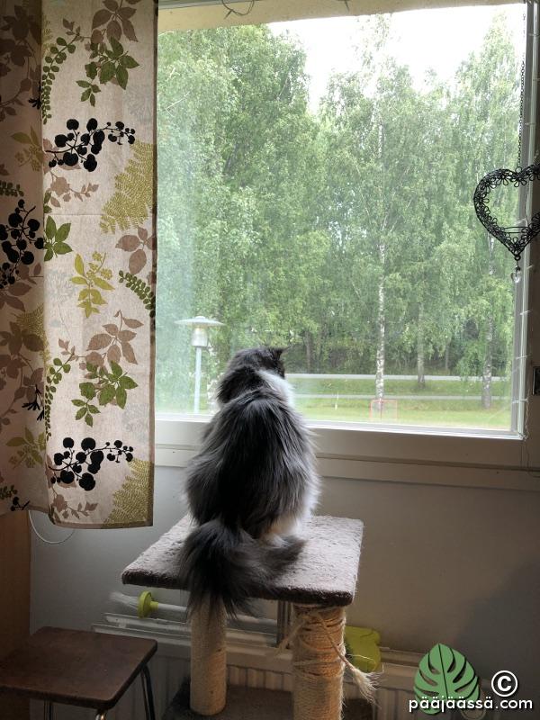 kissan kiipeilyteline ikkunalla