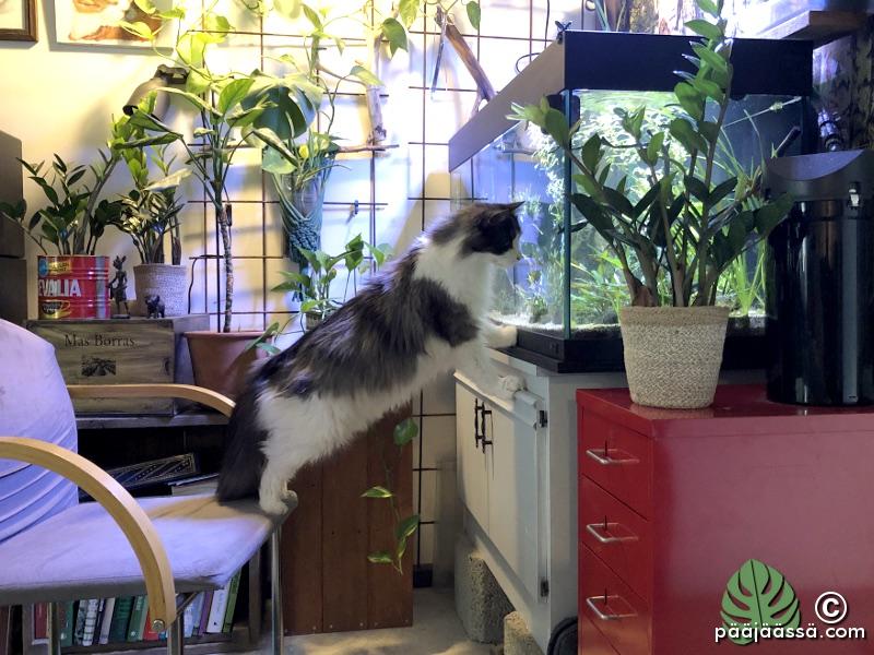 akvaario on hyvä kissa-TV