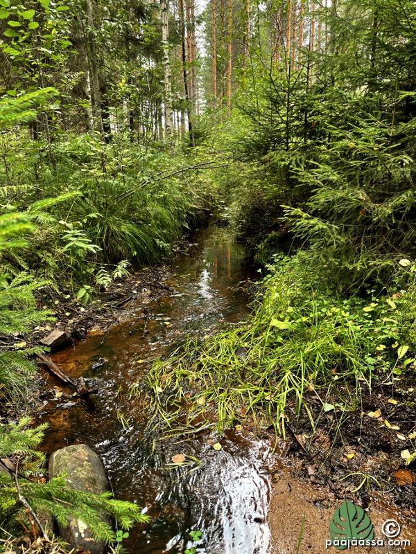 Metsässä kulkee pieni joki
